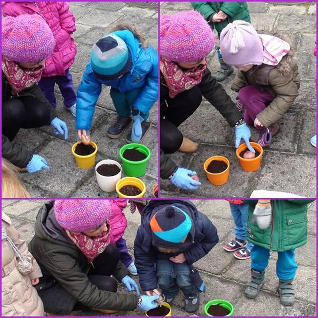 Galeria: Przedszkolacy sadzą cebulki kwiatowe - marzec 2016